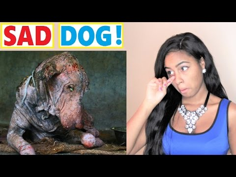 Amazing transformation of sick DOG who had given up hope - Reaction