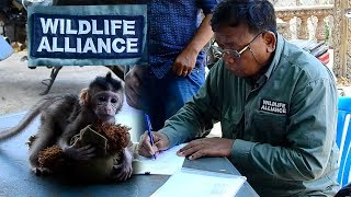 Rescue Orphan baby Sabrina successfully - Wildlife Alliance com and pickup orphan baby