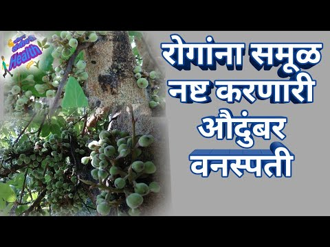 11рд░реЛрдЧрд╛рдЪрд╛ рд╕рдореВрд│рдирд╛рд╢ рдХрд░рдгрд╛рд░реА рд╡рдирд╕реНрдкрддреА, рддреБрдореНрд╣рд╛рд▓рд╛ рдорд╛рд╣реАрдд рдЖрд╣реЗ рдХрд╛ ?11disease medicine plants #рдЬреАрд╡рдирд╕рдВрдЬреАрд╡рдиреАHealth