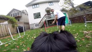 Gopro Dog Agility Training With Pomeranian-mix