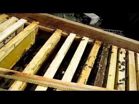 пчеловодство в ульях лежаках от а до я