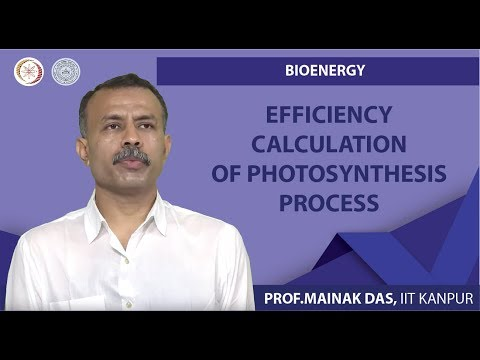 Efficiency Calculation of Photosynthesis Process