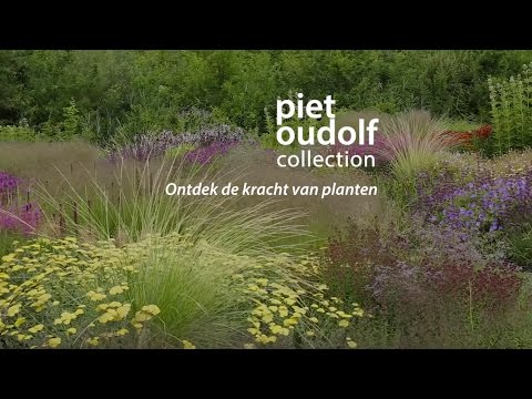 Piet Oudolf Collection