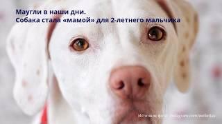 Собака стала