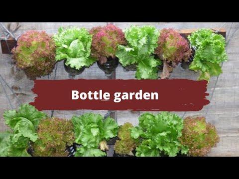 Bottle Garden How To Grow Vegetables In Empty Water