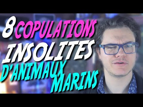 CHRIS : 8 Copulations Insolites d'Animaux Marins