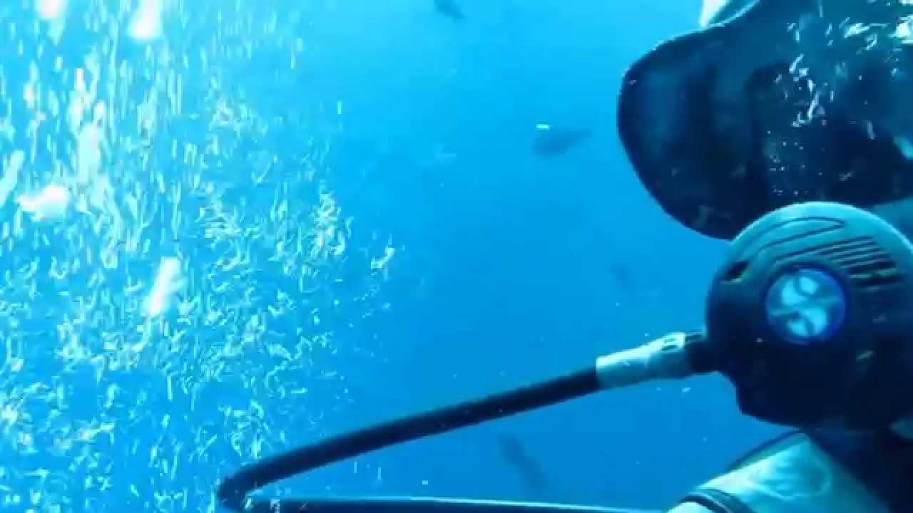 Diving sipadan semporna borneo top 5 dive site youtube - Sipadan dive sites ...