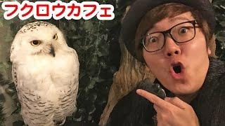 フクロウカフェアウルの森 http://2960.tokyo/asakusa/ ◇チャンネル登録...