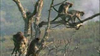 hayvanlar alemi çiftleşme çalışmaları