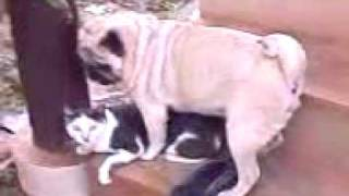 Repeat youtube video หมามันจะเอาแมวเป็นเมีย 2