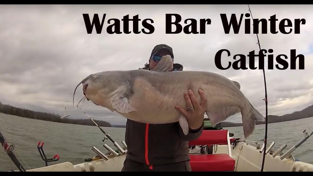 Watts bar winter catfish wintertime catfishing for Watts bar fishing report