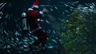 Santa Claus swims with fish in Seoul