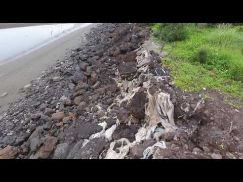 See Taiwan's most poisonous coast 1 Hsinchu Xinfeng Coast 20170519-1