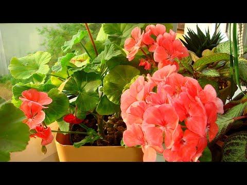 комнатные растения август 2020 год