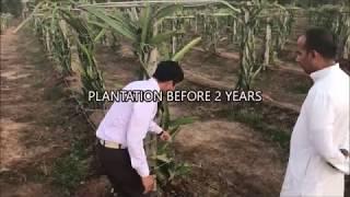 DRAGON FRUIT FARMING ( ड्रैगन फ्रूट की खेती )