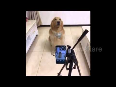 Dog actually smiles for the camera on command   Other   Newsflare 1
