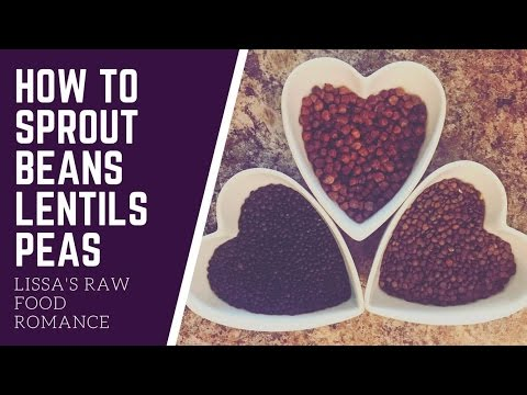 HOW TO SPROUT BEANS || LENTILS AND PEAS || VEGAN RAW FOOD