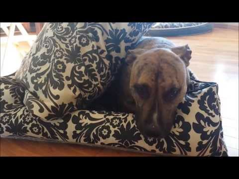 Jax & Bones vs. PLAY Lifestyle Dog Beds