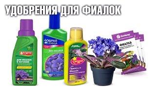 видео Удобрение для фиалок (для цветения): в домашних условиях