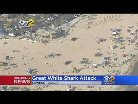 Beach Closed After Alleged Great White Shark Attack