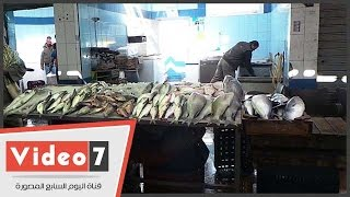 8 آلاف طن سمك حصاد موسم الصيد بخليج السويس فى 8 شهور