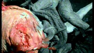 Paleoworld- Killer Raptors