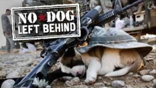 No Dog Left Behind clip - Premieres Nov 15 at 10PM on the Military Channel