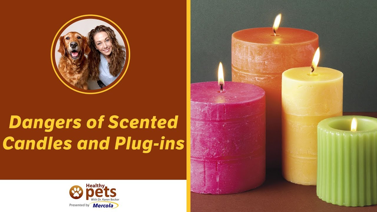 Scents That Could Be Harmful To Your Pets