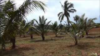 land pollachi