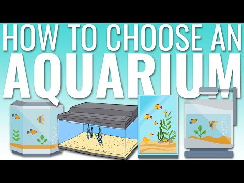 How To Choose An Aquarium | BigAlsPets.com