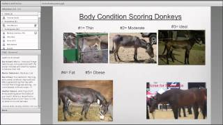 Feeding and Care of Mules and Donkeys