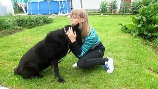 Как приручить депривированную собаку