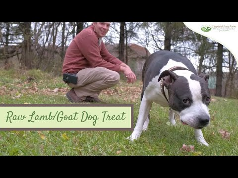 raw-lamb-and-goat-treats-for-dogs