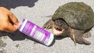 Godzilla Snapping Turtle VS Soda Can! *BITE TEST*