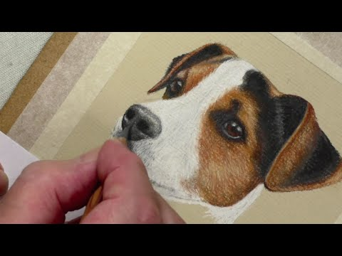 Draw a Jack Russell   Pastel Pencils