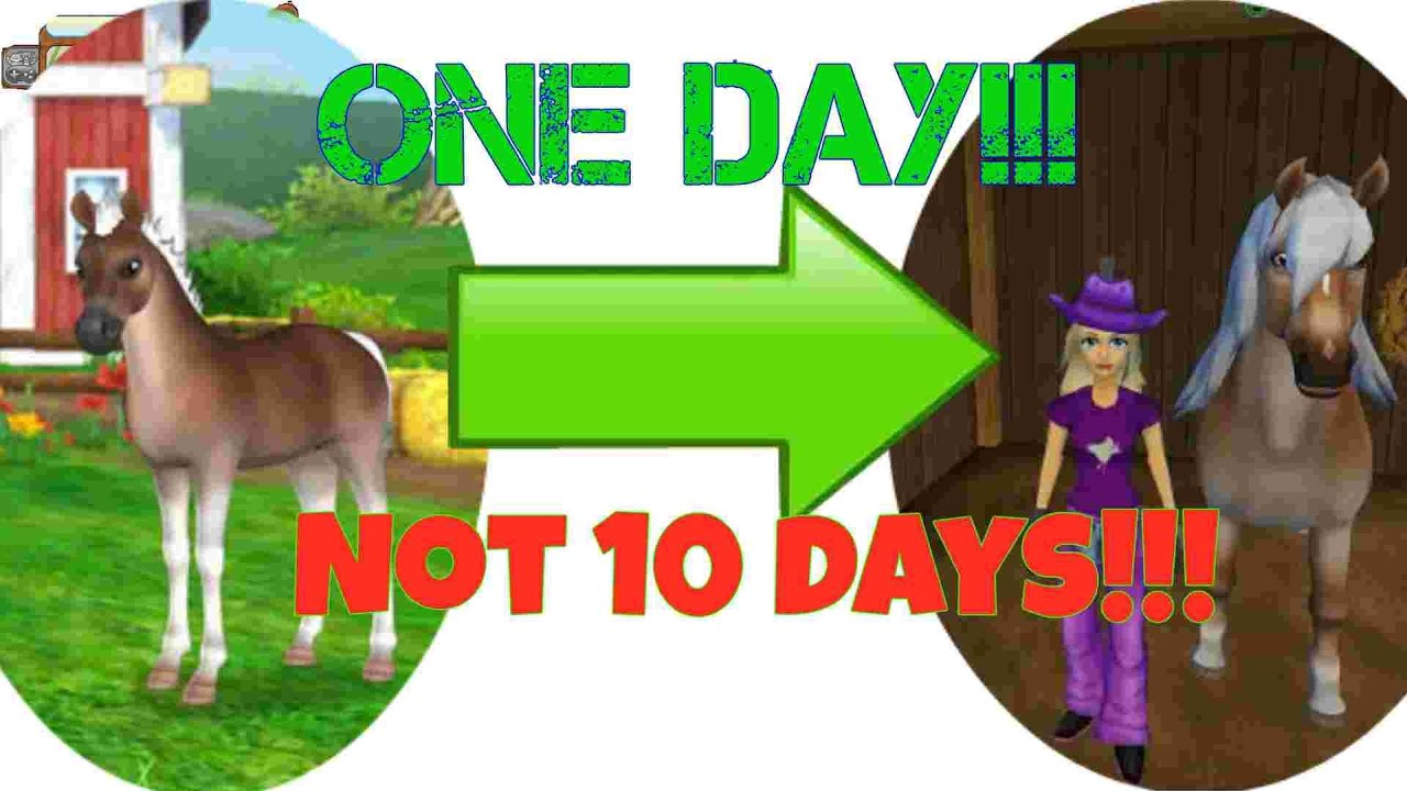 Star Stable Horses-How to level up your foal in one day!