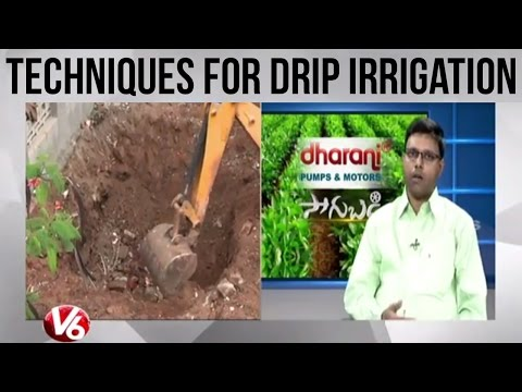 Techniques for drip irrigation by Agriculture scientist Dr Krishna Reddy - Sagubadi