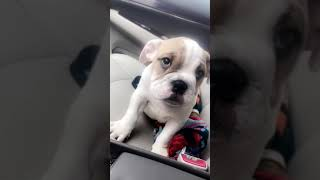 The cutest puppy 2018😍