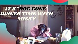 Funny Dog Video / Dog Gone Dinner Time Black Lab, Humor