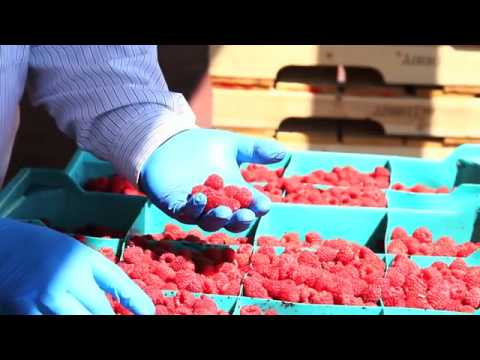 BC Raspberries - The process from farm-to-family.