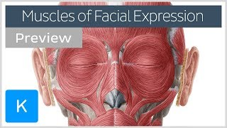 Muscles of facial expression (preview) - Human Anatomy |Kenhub
