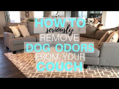 How to Remove Dog Odor From Your Couch | Deep Cleaning My Couch | Dog Odor Removal