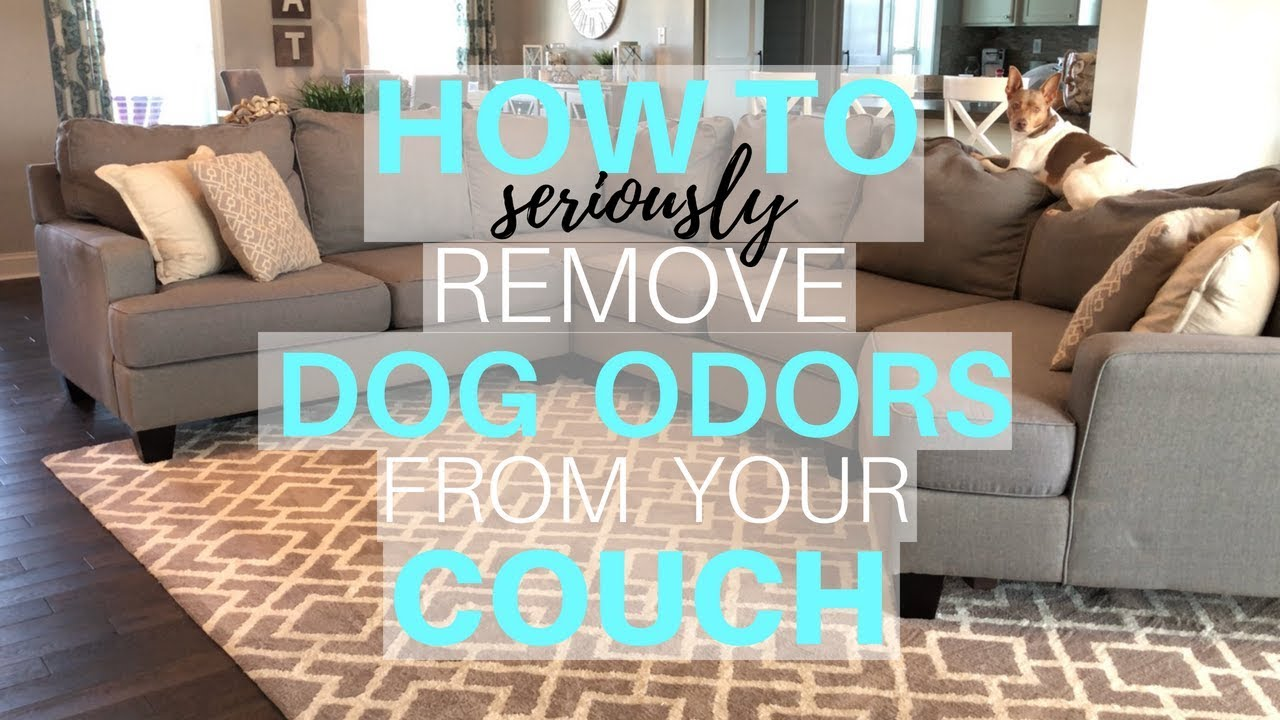 How to Remove Dog Odor From Your Couch | Deep Cleaning My Couch ...