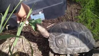 Mt. Tortoise