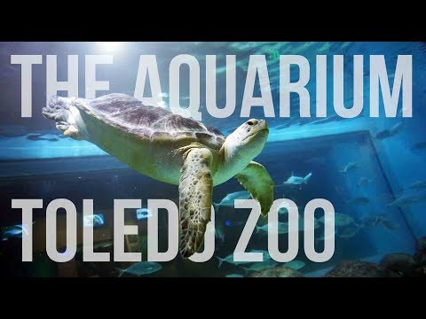 Ep. 38: The Toledo Zoo Aquarium -  A Must See