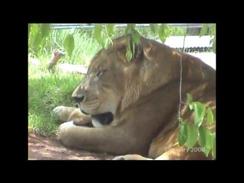 01 - Perth Zoo (2000)