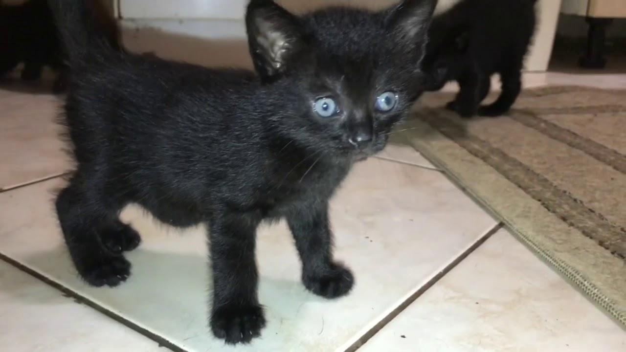 az emberekre veszélyes macska helminták paraziták az emberben