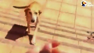 Stray Dog Picks Her Family