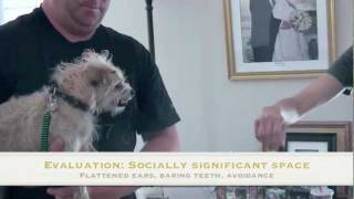 Dog Training Tutorial: Fearful, Aggressive Dogs; Fear Aggression In Dogs