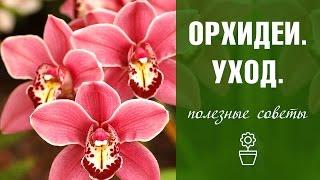 Как ухаживать за орхидеей? Часть 1.(Первая часть серии видео про #орхидеи Вторую часть можно посмотреть тут: https://www.youtube.com/watch?v=YxVKcXmSFUo Посмотрет..., 2016-10-13T11:54:54.000Z)